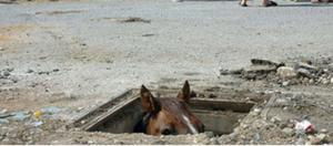 horse-in-drain